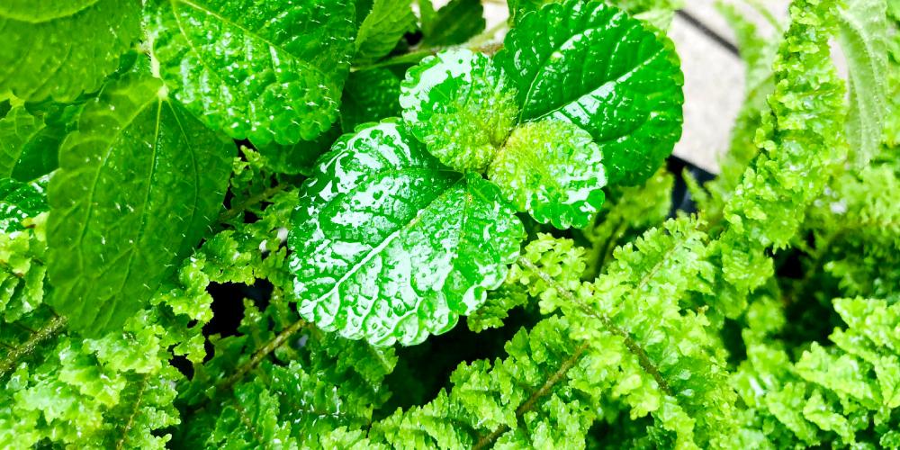 福津花屋観葉植物